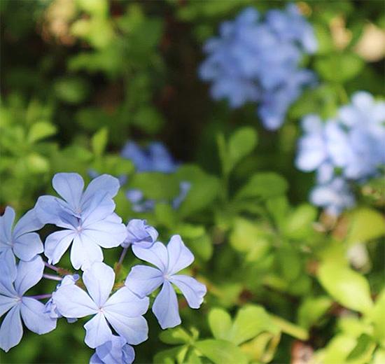 沖縄の植物 宿泊の際はどうぞお楽しみ下さい